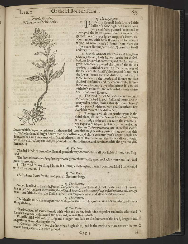 The herball: or, Generall historie of plantes