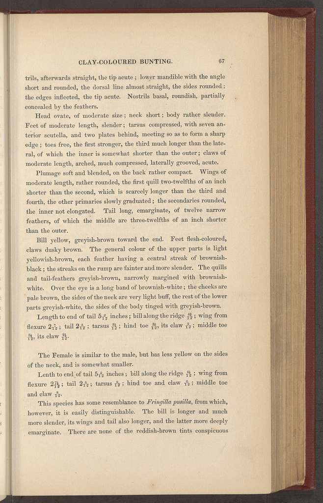 Ornithological biography, or An account of the habits of the birds of the United States of America; accompanied by descriptions of the objects represented in the work entitled The birds of America, and interspersed with delineations of American scenery and manners
