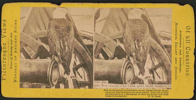 the live war eagle of Wisconsin from the Centennial Historic Photos Old Abe