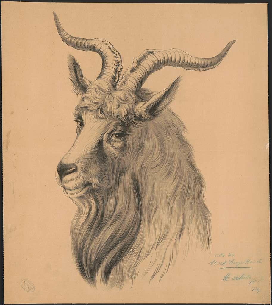 No. 60, Bock large head