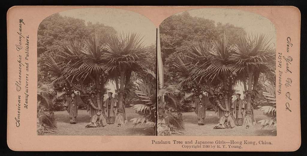 Pandanu tree and Japanese girls -- Hong Kong, China