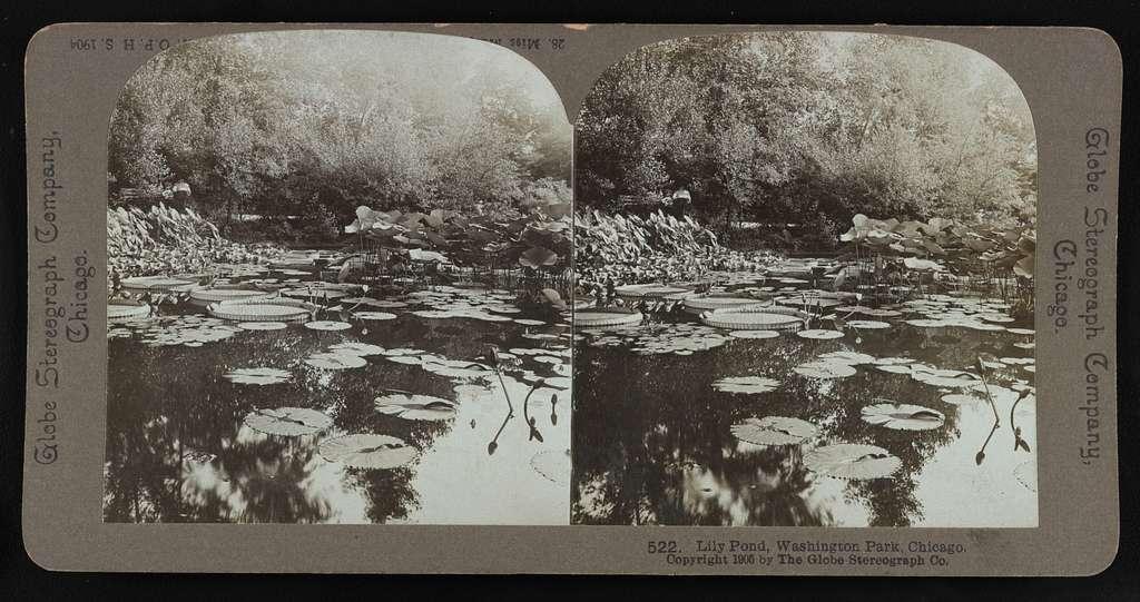 Lily pond, Washington Park, Chicago