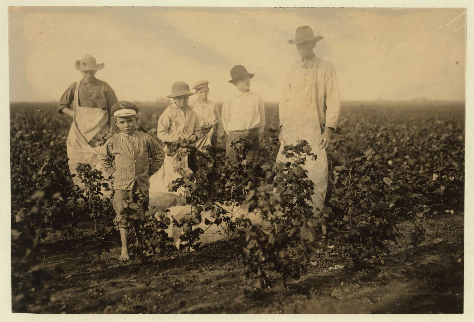 Scene in the cotton field of the Baptist Orphanage, near Waxahachie. These boys, from seven years old and upward, pick cotton, helping this man, outside of school hours., There are 20 children in the Orphanage, mostly girls, and it is supported by the Baptists of Texas. Location: Waxahachie vicinity, Texas