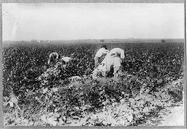 Scene in the cotton field of the Baptist Orphanage, near Waxahachie. These boys, from seven years and upwards, pick cotton, helping this man, outside of school hours. There are 20 children in this Orphanage, mostly girls, and it is supported by the Baptists of Texas. Location: Waxahachie vicinity, Texas