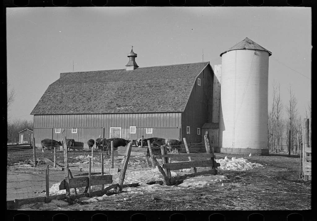 Farmyard, silo, barn and herd of cattle on G.H. West's farm near Estherville, Iowa. This farm is owner-operated
