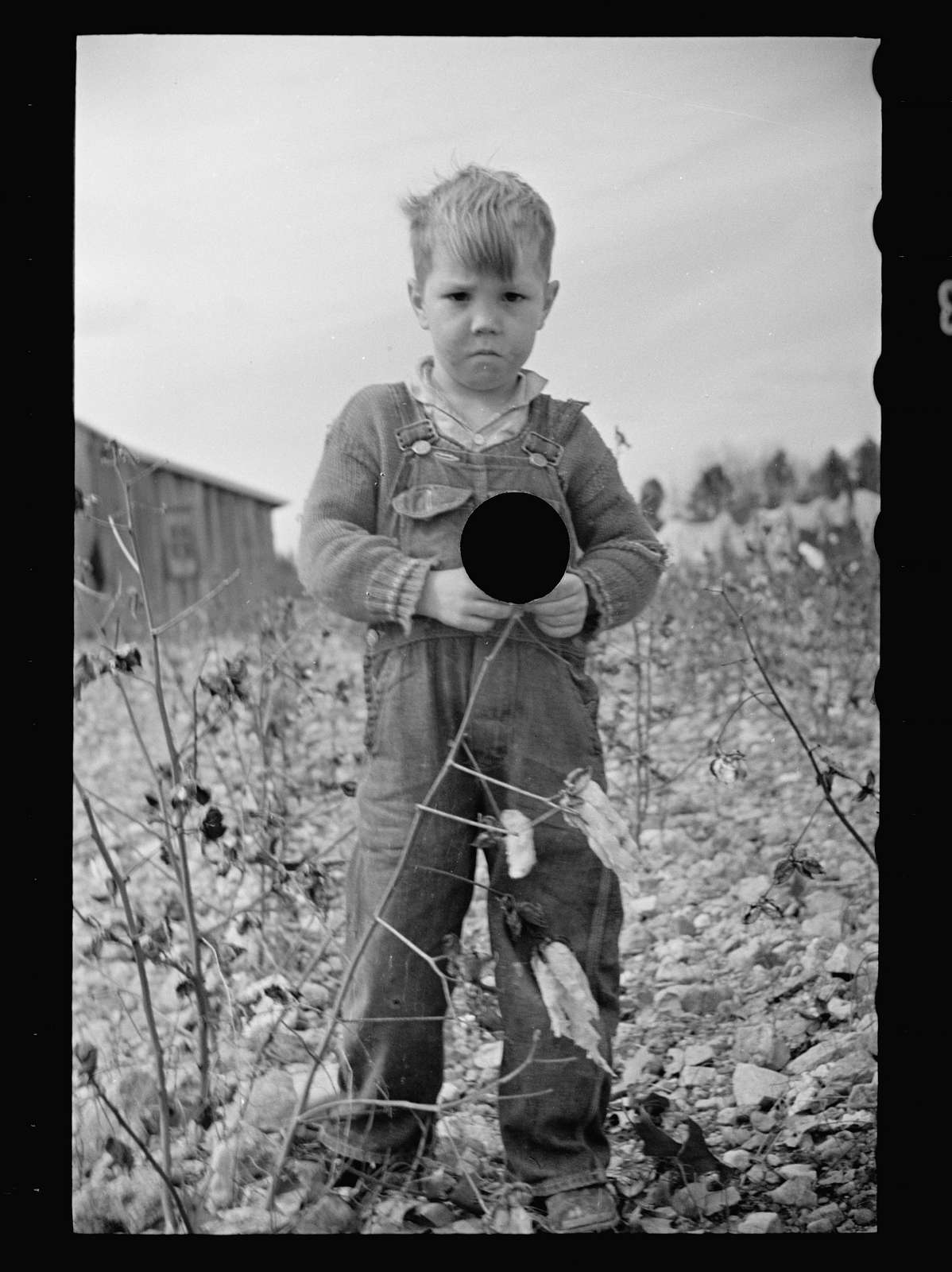 Untitled photo, possibly related to: Cotton field showing rock-strewn soil and character of land at Crabtree Creek Recreational Project near Raleigh, North Carolina