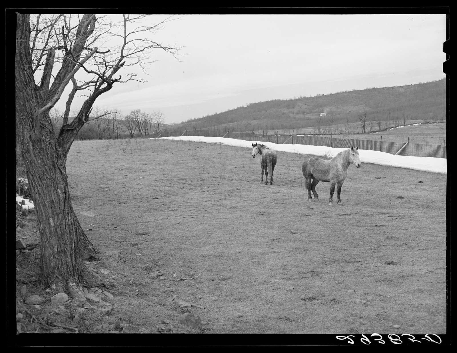 Farmland. Frederick County, Virginia