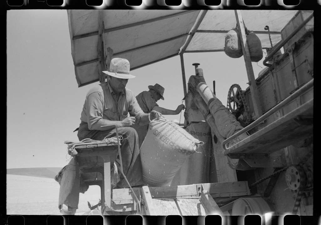 Walla Walla County, Washington. Men on the combine in a wheat field. The man in the foreground is sewing up the bags of wheat