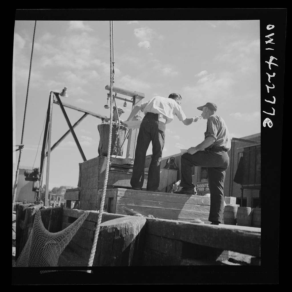 Gloucester, Massachusetts. Loading fish onto a wharf
