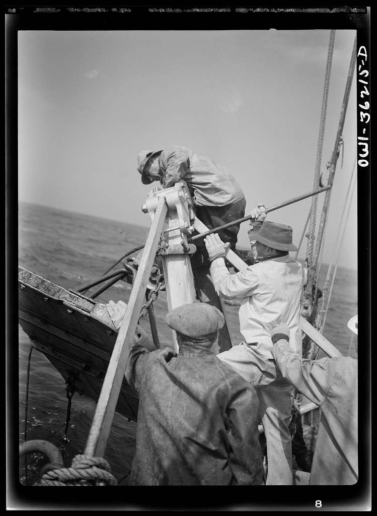 """Gloucester, Massachusetts. Muscles strain as husky fishermen of Portuguese descent pull nets on board the """"Old Glory"""". Their haul is rosefish, a species now used in large quantities by the armed forces"""
