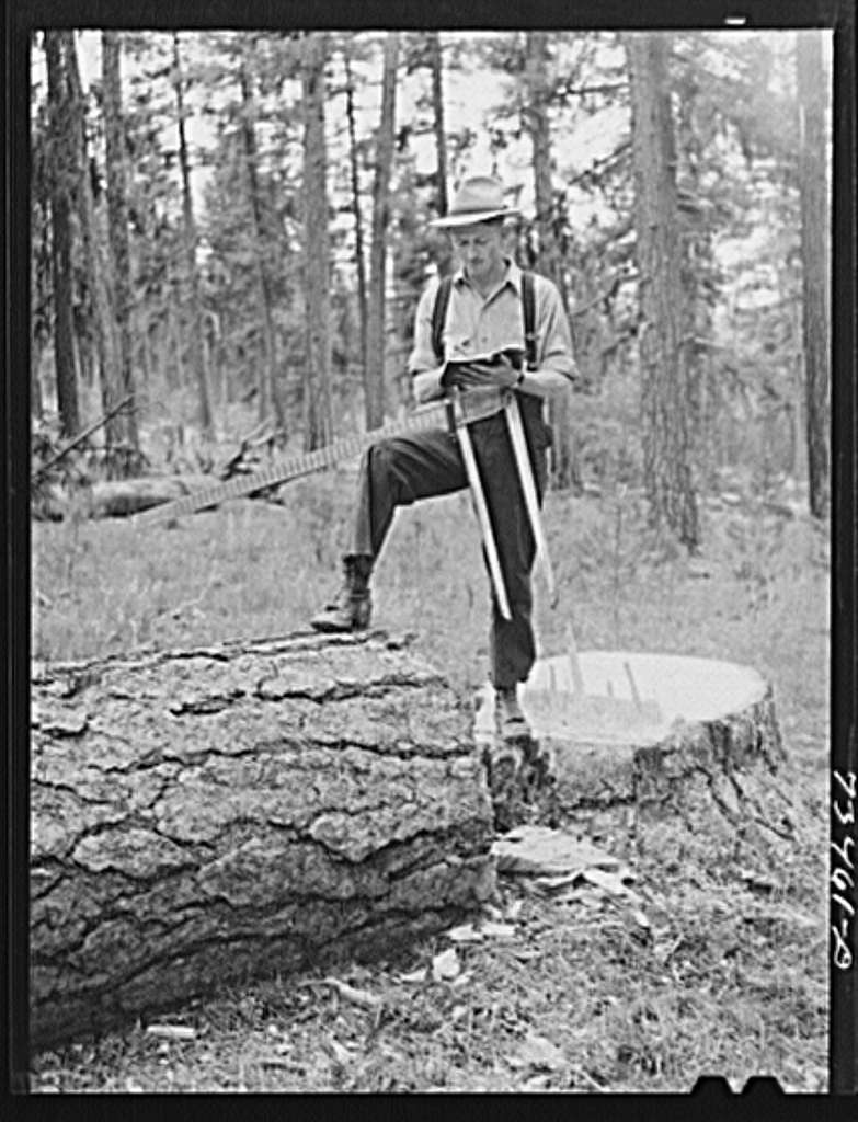"""Grant County, Oregon. Malheur National Forest. Lumberjack measures """"scales"""" log. He keeps a record of how many and what size logs are cut and estimates board feet which are cut"""