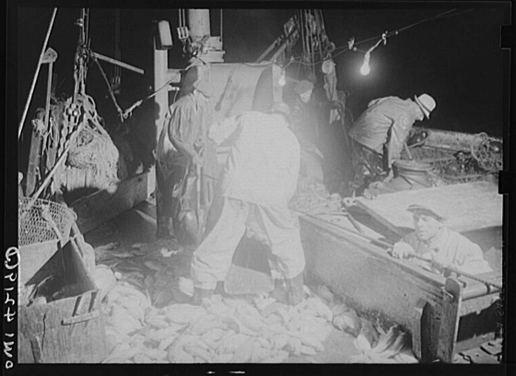 On board a fishing vessel out from Gloucester, Massachusetts. Men shoveling red fish at night