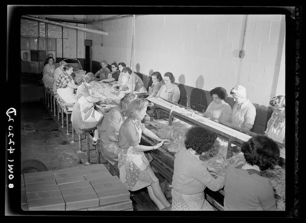 On board a fishing vessel out from Gloucester, Massachusetts. Women in a packing plant candling fish and cutting out a parasite known as Syphirin lumpii