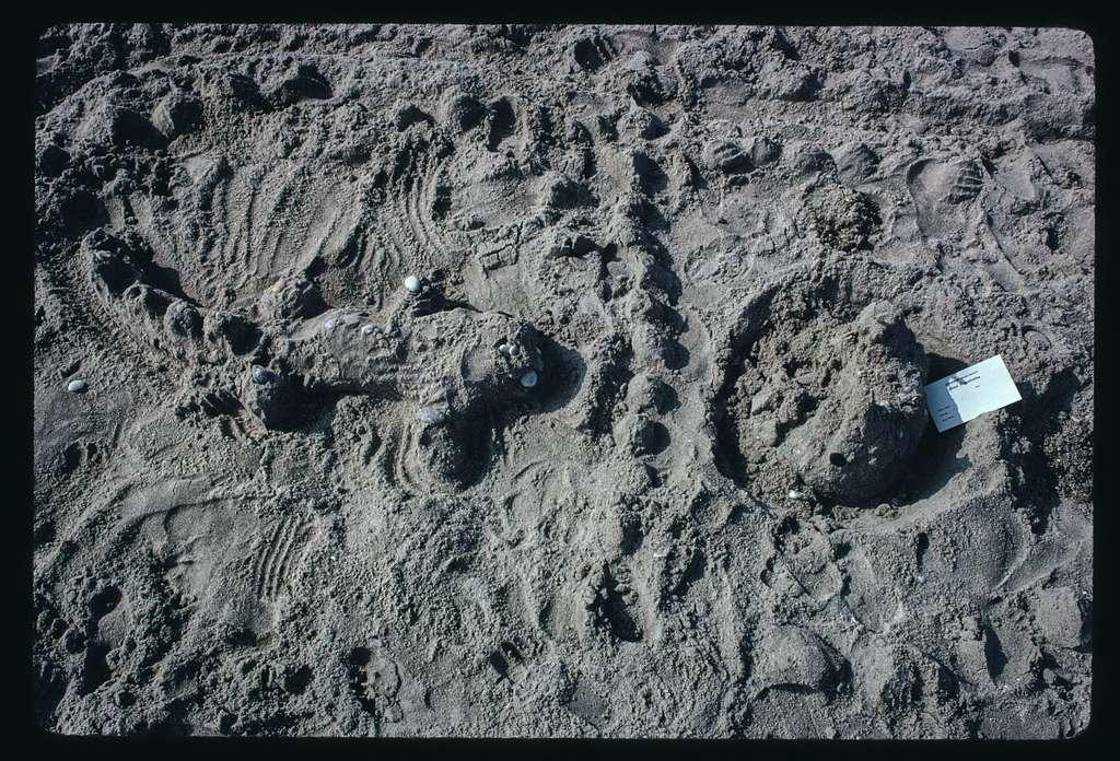 Sand sculpture contest, Canonchet Beach, Rhode Island