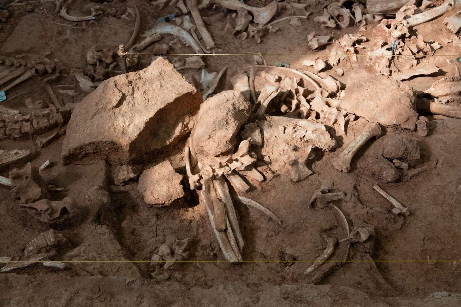 American bison, or buffalo, bones at the Vore Buffalo Jump, a sinkhole and archeological site in Crook County, Wyoming