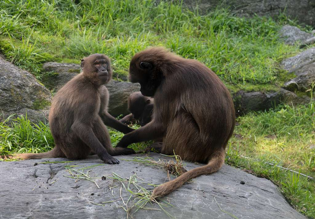 Monkeys gather at the Bronx Zoo in The Bronx, one of five county-level divisions within sprawling New York, New York