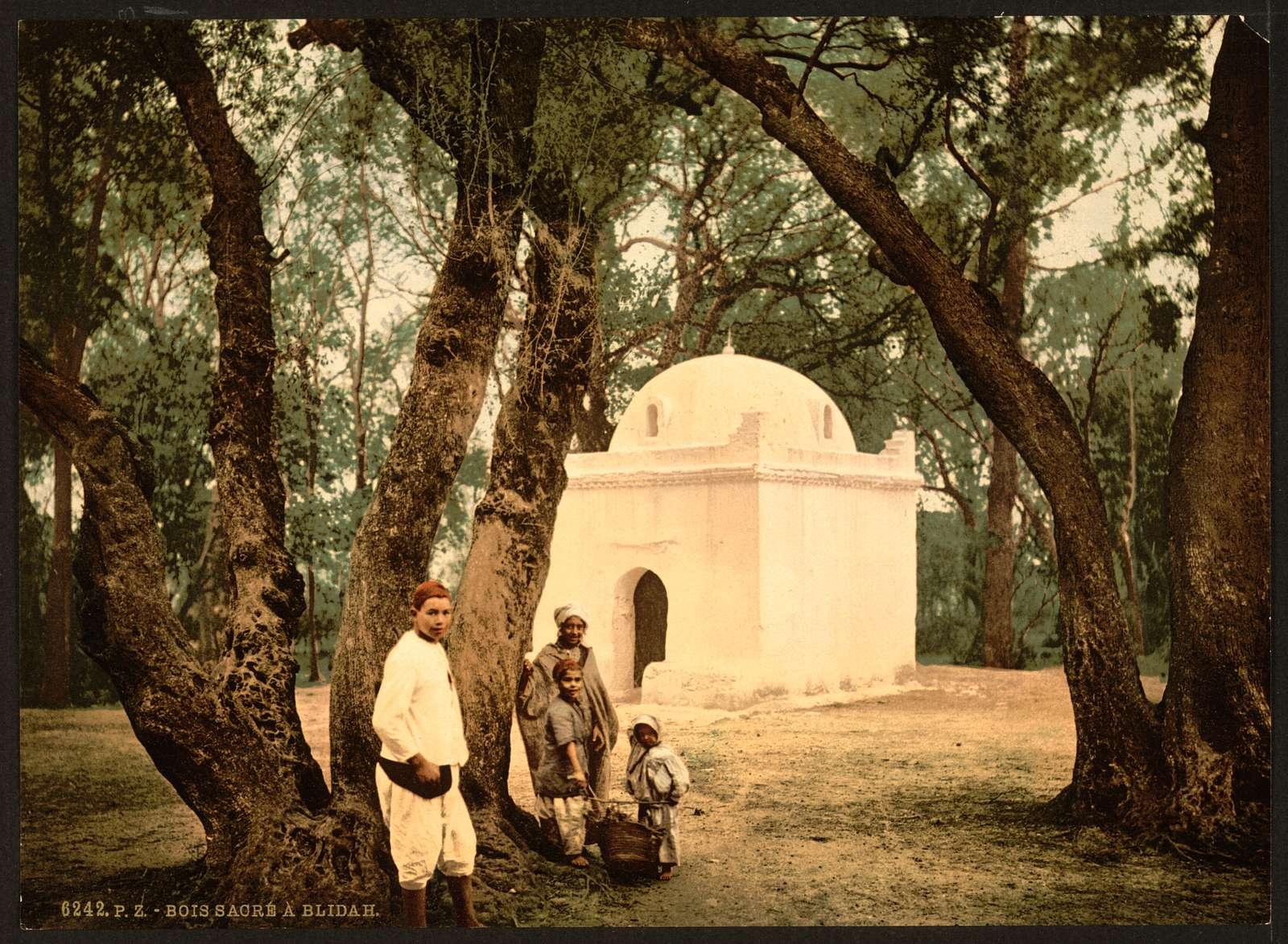 [The sacred wood, Blidah, Algeria]