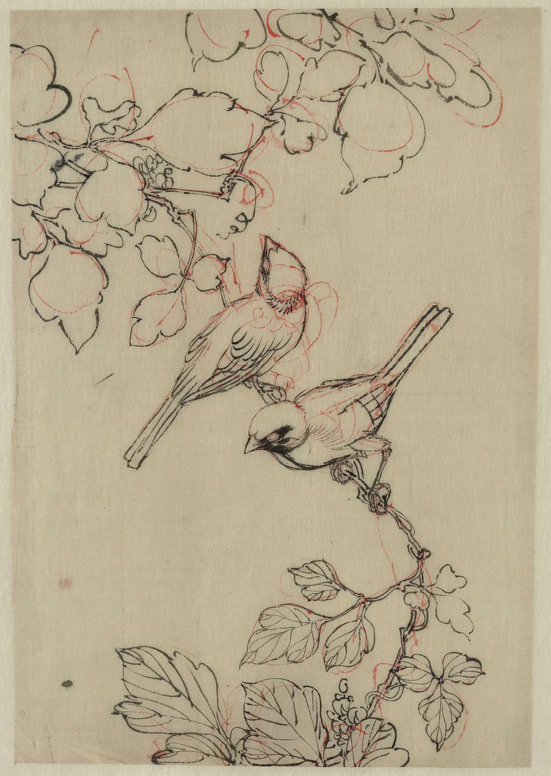[Two birds perched on grapevines]