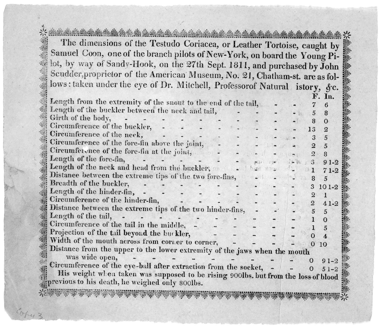 The dimensions of the Testudo Coriacea, or Leather Tortoise, caught by Samuel Coon, one of the branch pilots of New-York on board the Young Pilot, by way of Sandy-Hook, on the 27th Sept. 1811, and purchased by John Scudder, proprietor of the Ame