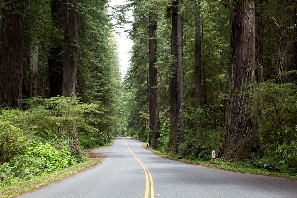 The Redwood National and State Parks along the coast of northern California
