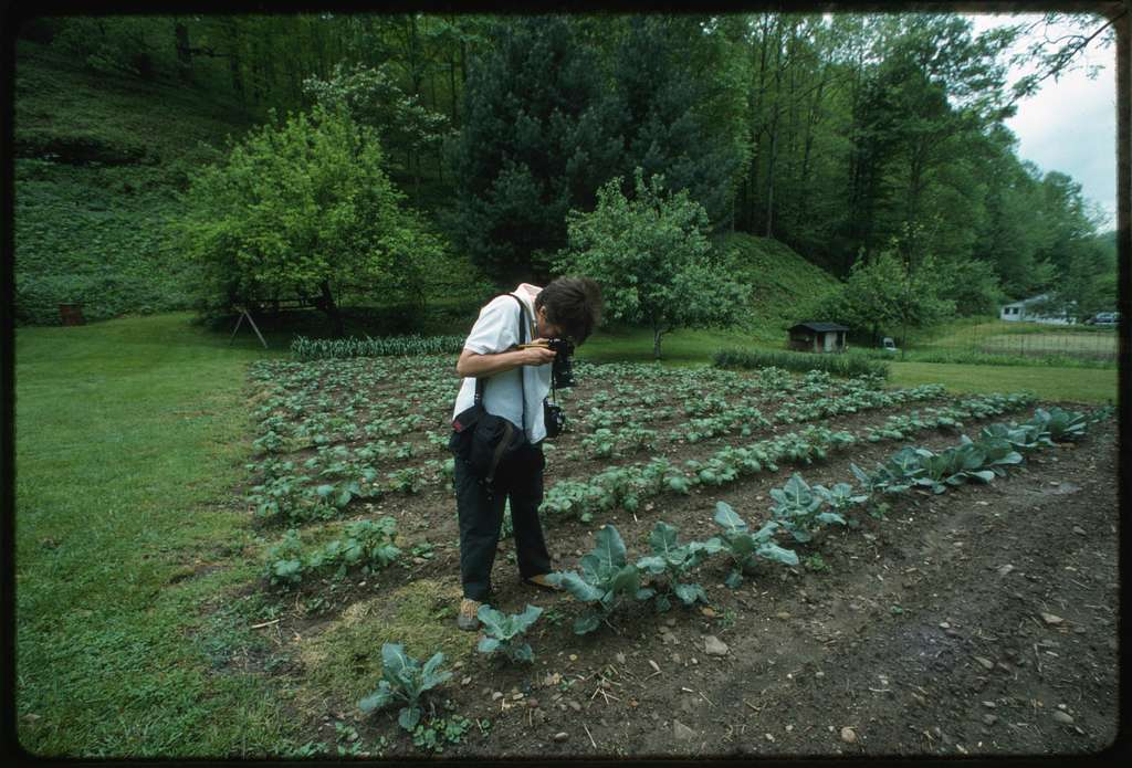 Lyntha Eiler photographing cabbages in Ivan Jarrell's garden