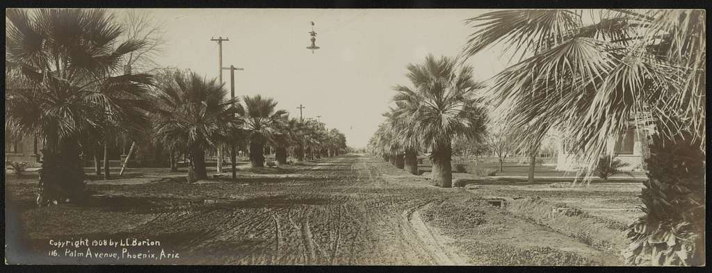Palm Avenue, Phoenix, Arizona / Lester Clement Barton.