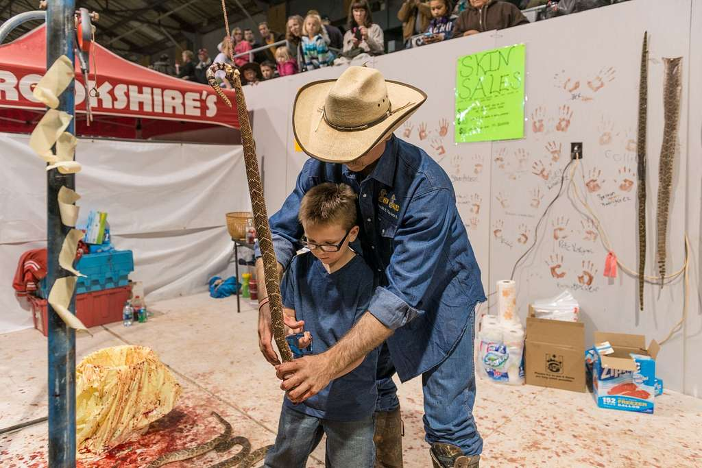 """A skilled snake-skinner demonstrates his craft to a young visitor at the """"World's Largest Rattlesnake Roundup"""" in Sweetwater, Texas"""