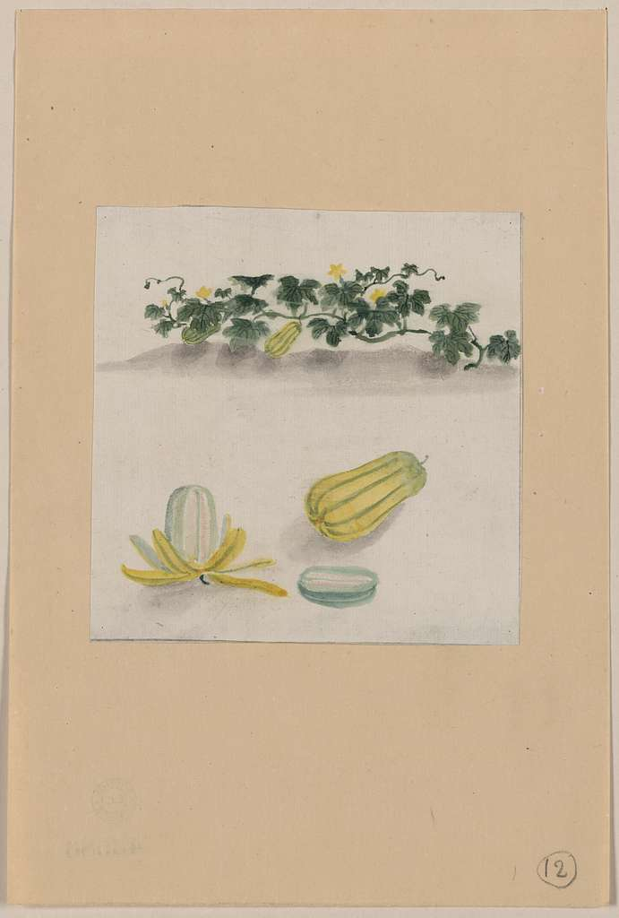 [Delicata squash with plant vines growing in the background]