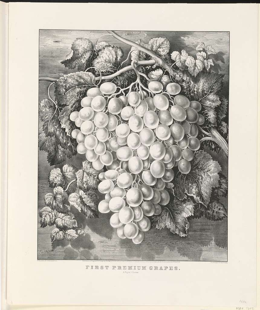 First premium grapes: A royal cluster