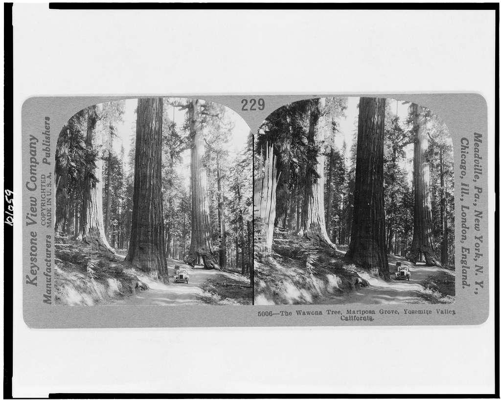 The Wawona Tree, Mariposa Grove, Yosemite Valley, California - PICRYL  Public Domain Image